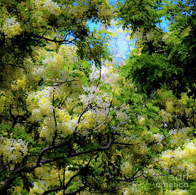 Photograph - Trees And Flowers Hawaii by D Davila