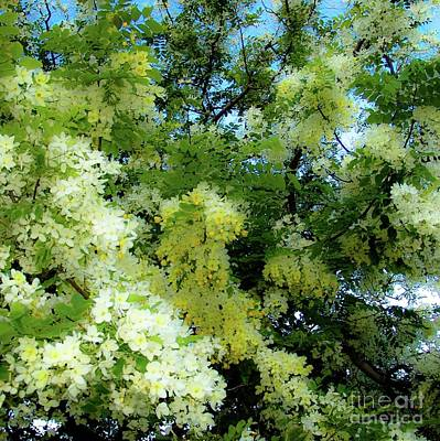 Photograph - Trees And Flowers In Hawaii 492 Sq by D Davila