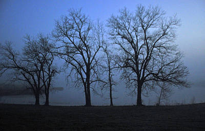 Photograph - Trees And Fog by Vonda Barnett