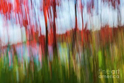 Impressionism Photos - Trees and lake by Elena Elisseeva