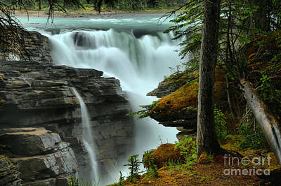 Athabasca Falls Photograph - Trees And Logs By Athabasca by Adam Jewell