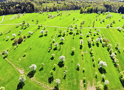 Photograph - Trees And Meadow In Spring Aerial View by Matthias Hauser