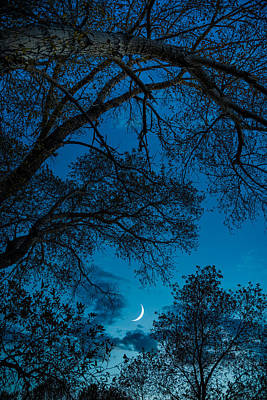 Trees And Moon Art Print by Darren White