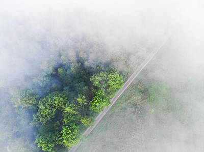 Photograph - Trees And Morning Fog Aerial View by Matthias Hauser