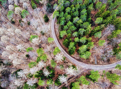 Photograph - Trees And Path From Above Drone Photography by Matthias Hauser