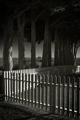 Trees And Pickets Art Print