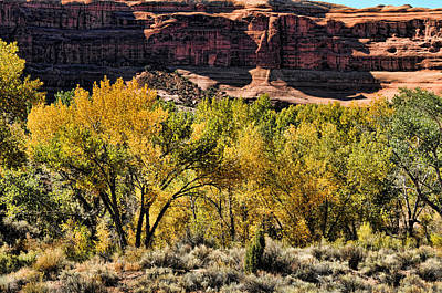 Photograph - Trees And Rock In The Arches by Lawrence Christopher