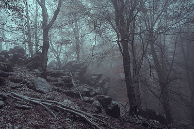 Photograph - Trees And Rocks In Misty Woods by Jenny Rainbow