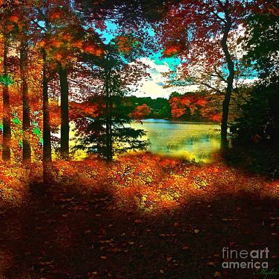 Photograph - Trees And Shadows In New England by Saundra Myles