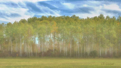 Photograph - Trees And Sky by CR  Courson