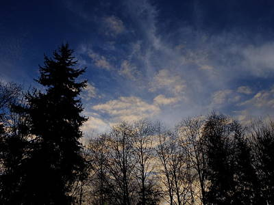 Photograph - Trees And Sky by John Rossman