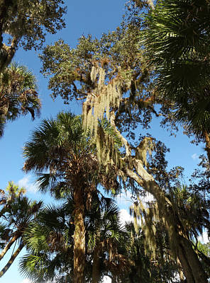 Photograph - Trees And Spanish Moss by Sally Weigand