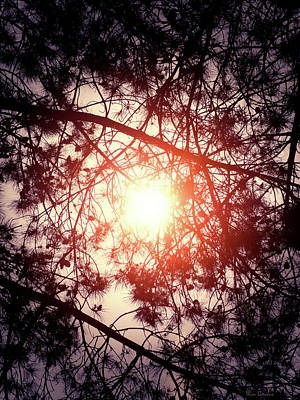 Photograph - Trees And The Sun by Wim Lanclus