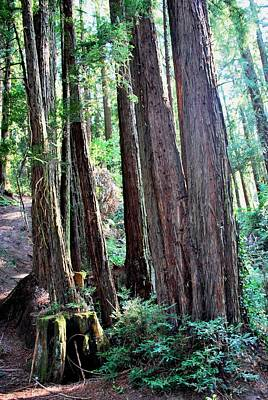 Photograph - Trees And Tree Stump Forest Portrait View by Matt Harang