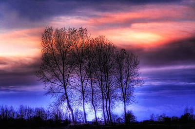 Photograph - Trees And Twilight by Roberto Pagani