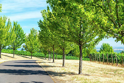 Pinot Noir Photograph - Trees And Vineyards by Jess Kraft