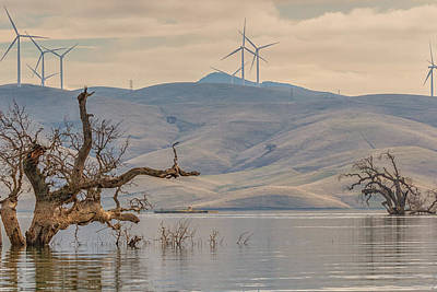 Photograph - Trees And Wind Turbines At Los Vaqueros by Marc Crumpler
