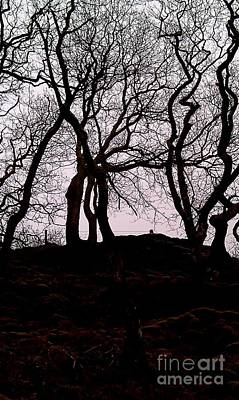 Photograph - Trees by Anthony Manders