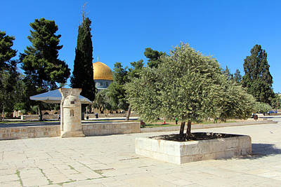 Photograph - Trees At Al Aqsa by Munir Alawi