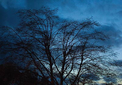 Photograph - Trees At Dusk by John Rossman