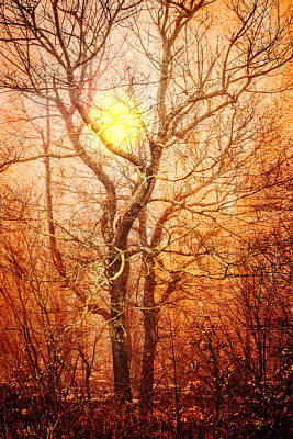 Trees At Sunset Print by Debra and Dave Vanderlaan
