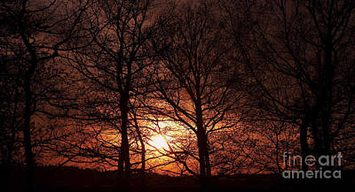 Trees At Sunset Art Print by Michal Boubin