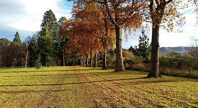 Photograph - Trees At The Park by Nareeta Martin