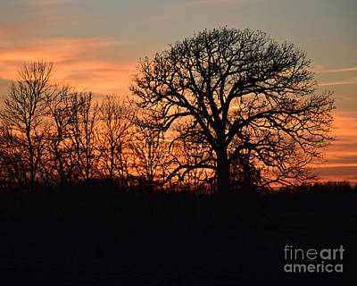 Photograph - Trees At Twilight by Kathy M Krause