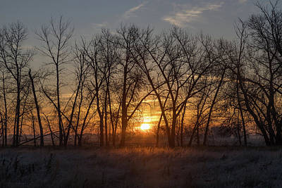 Photograph - Trees Backlit By Sunrise by Tony Hake
