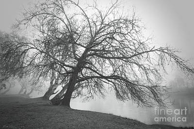 Photograph - Trees Bend To Caress Me by Linda Lees