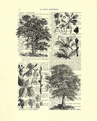 Nature Study Digital Art - Trees Black And White Illustration by Madame Memento
