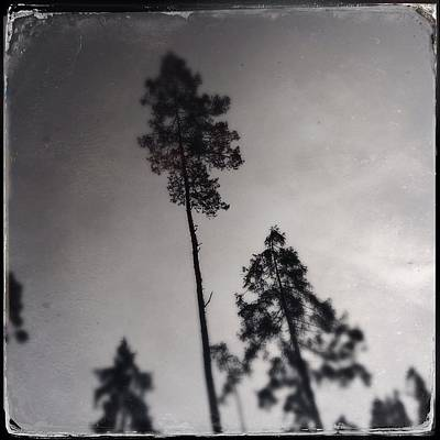 Artwork Wall Art - Photograph - Trees Black And White Wetplate by Matthias Hauser