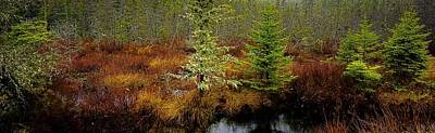 Photograph - Trees Bog And Driizzle - Newfoundland No.2 by Desmond Raymond