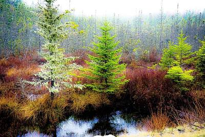 Photograph - Trees Bog And Drizzle - Newfoundland by Desmond Raymond