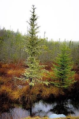Photograph - Trees Bog And Drizzle - Newfoundland No.3 by Desmond Raymond