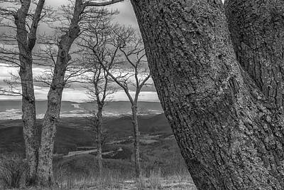 Photograph - Trees-bw by Jonathan Nguyen