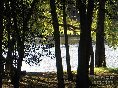 Photograph - Trees By Rivers Of Water by Deborah Finley