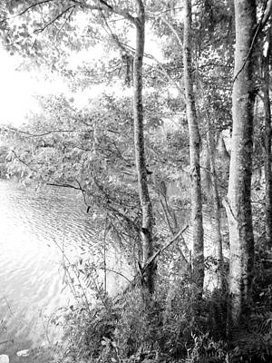 Peaceful Scene Drawing - Trees By The Lake by Elaine Ferrell