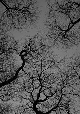 Photograph - Trees by Christopher Kirby
