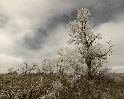 Photograph - Trees Covered In Hoar Frost by Art Whitton
