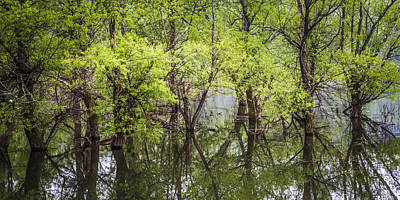 Willow Lake Photograph - Trees by Debra and Dave Vanderlaan