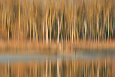 Photograph - Trees - Desoto Lake by Nikolyn McDonald