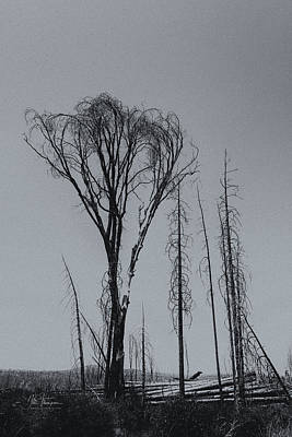 Photograph - Trees Destroyed By Fire by Jim Thompson