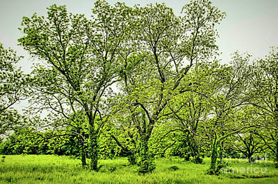 Photograph - Trees by Diana Mary Sharpton
