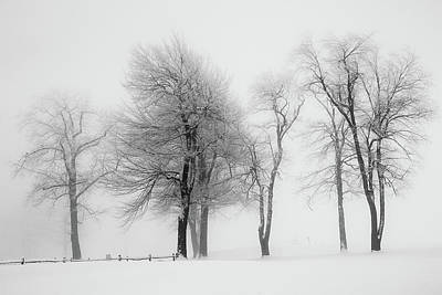Photograph - Trees by Emmanuel Panagiotakis