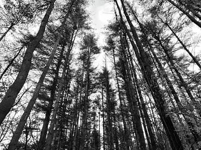 Trees Art Print by Eric Radclyffe