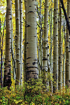 True Grit Photograph - Trees For The Forest by Jennifer Grover