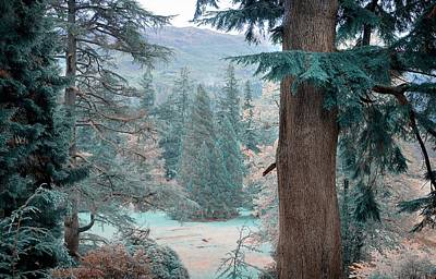 Photograph - Trees Framing. Nature In Alien Skin by Jenny Rainbow