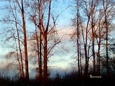 Photograph - Trees From Heaven by Sadie Reneau