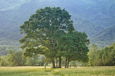 Spring Scenes Photograph - Trees - Great Smoky Mountains - Meadow by Nikolyn McDonald